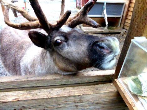 reindeer preserve, Ketchikan